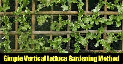 simple vertical lettuce gardening method