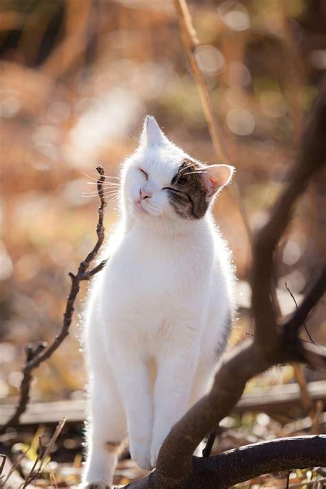 sunny  intimate feline photography  seiji mamiya