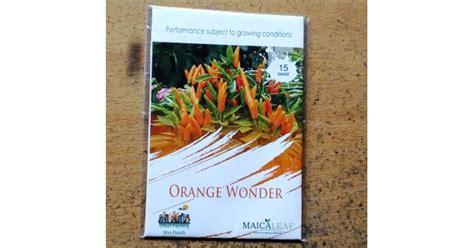 Jual Bibit Cabe Hias jual benih cabe hias orange