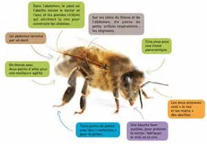 les 6 fondamentaux 224 savoir sur les abeilles