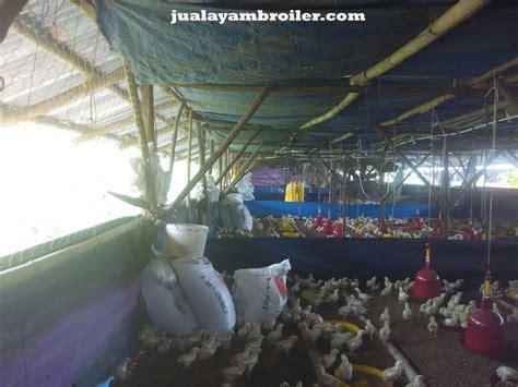 Jual Bibit Ayam Broiler Di Bekasi jual ayam broiler di kemang bekasi jual ayam broiler
