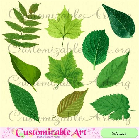 free printable green leaves leaf clipart digital leaf clip art leaves clipart green leaf
