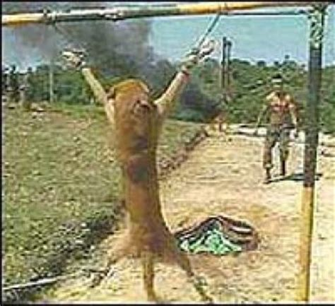 how to kill dogs afc dogs die to teach peru s soldiers how to kill
