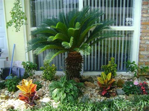 the 25 best small palm trees ideas on