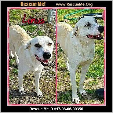 r e a l rottweiler rescue ohio ohio rescue adoptions rescueme org