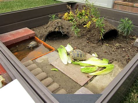 outdoor turtle habitat would need some modifications to prevent escapees and predators but very