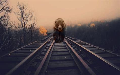 bears nature animals photo manipulation railway