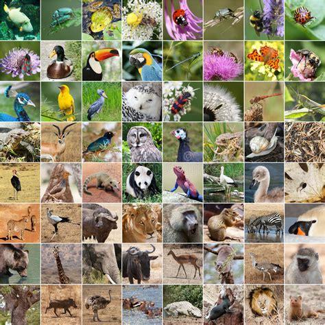 la fauna pictures collage de la fauna foto de archivo imagen de elefante 47869930