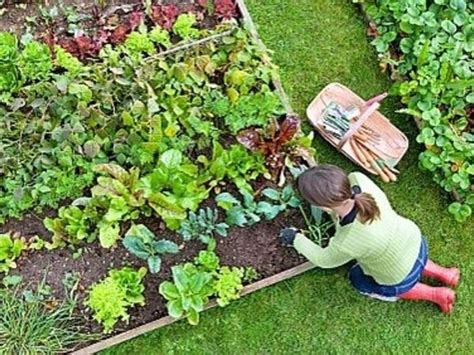 How To Start A Vegetable Garden Starting Vegetable Garden