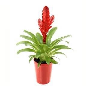 vri 233 s 233 a pot de diam 232 tre 12 cm plantes fleuries d