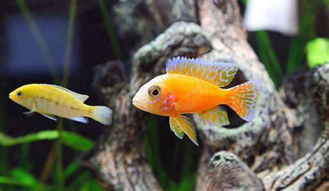 alimentazione pesci alimentazione e accessori per pesci e rettili