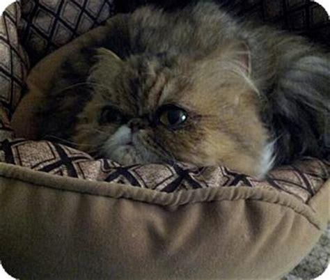 rescue columbus ohio cat for adoption in columbus ohio