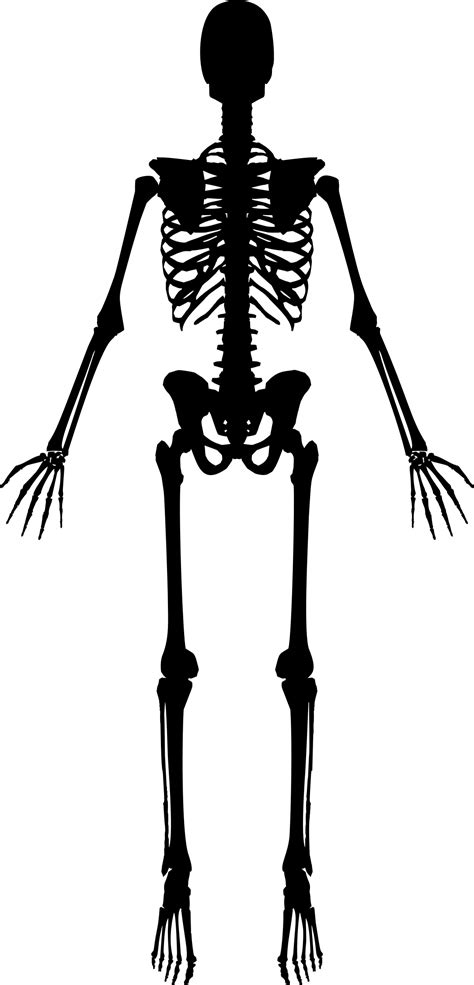 Clipart skeleton baby skeleton, Clipart skeleton baby