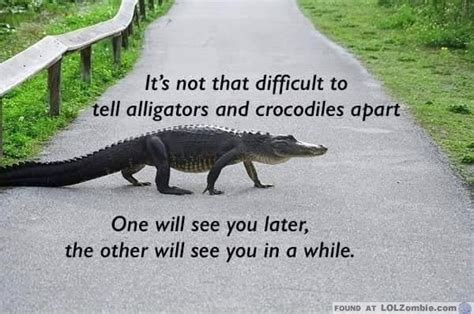 the difference between alligators and crocodiles what s the difference between alligators and crocodiles