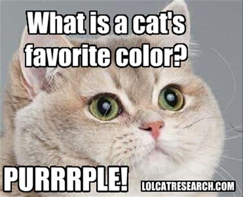 Cute Kitty Memes - lol cat research cute cat favorite color meme joke catz pinterest cat memes meme and