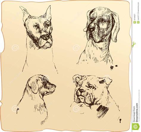 vintage sketch book set of dogs heads dalmatian bloodhound bulldog