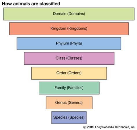 definition of animal biology taxonomy definition exles levels classification