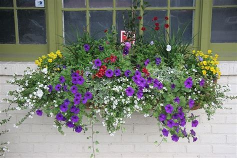 window box plants for sun planter box plants sun woodworking projects plans