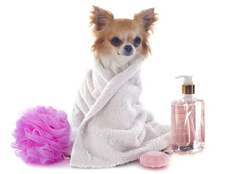 dogs grooming all canines great and small it s all about your