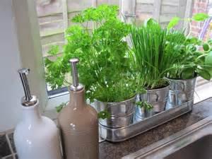 kitchen herb garden free for all friday mason jar herb garden swoon worthy