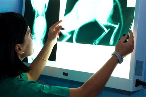 Duties Of A Vet by Veterinary Radiologist Career Profile