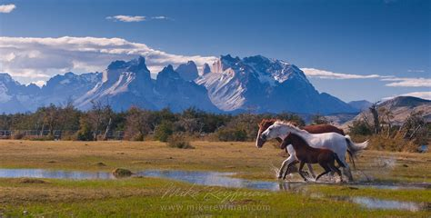 How To Use A Patagonia Gift Card Online - big stallion and mare just b cause