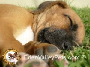 new puppy care new puppy care tips this is a exciting time browse thru our