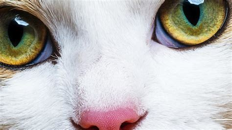 colors cats can see are cats color blind which colors can they see