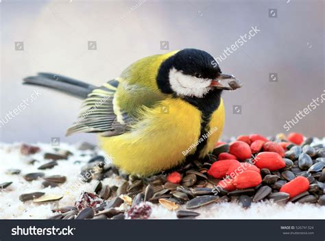 bird eats nuts seeds on bird stock photo 526741324