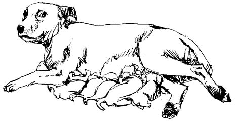litter of puppies coloring pages publiek domein dier tekeningen tekenen als hobby