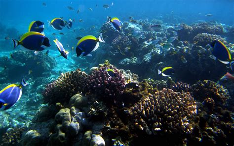 glass bottom boat mombasa mombasa tourist attractions that you must visit car hire