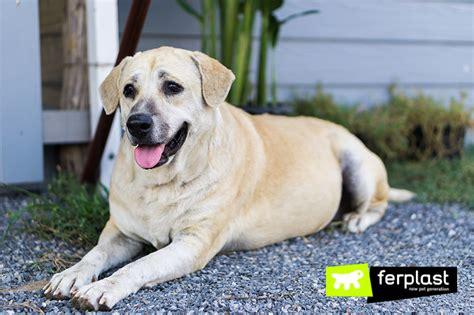 alimentazione cani anziani prevenire l obesit 224 anziano ferplast
