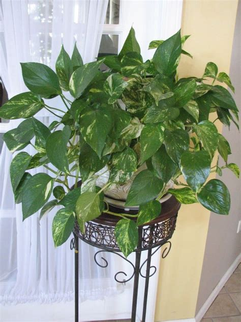 indoor plants  dont  sun products silahsilahcom