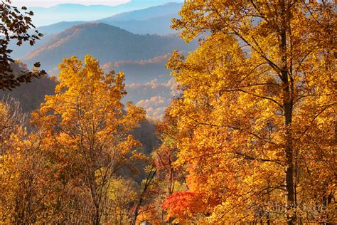fall foliage 2016 forecast and guide blue ridge mountain