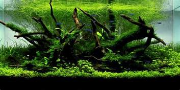 Guide To Aquascaping Understanding Nature Aquascaping Style The Aquarium Guide