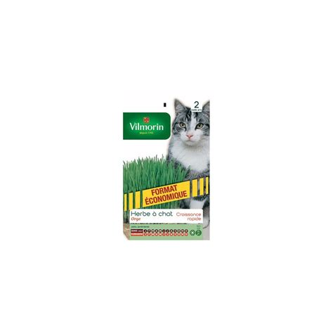 Planter Herbe à Chat by Herbe 224 Chat Plantes Et Jardins