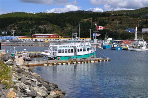 lowe boats newfoundland vandals destroy tour boat in bay bulls newfoundland
