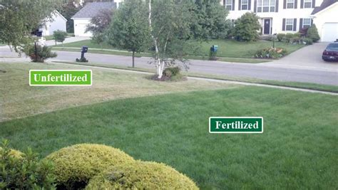 How To Start Landscaping Your Yard Lawn Renovation Grading Sodding Amp Seeding Services Kg