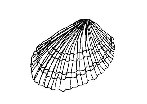 seashell color seashell coloring page az coloring pages