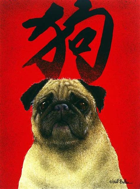 history of pugs breed the history of pugs breeds picture
