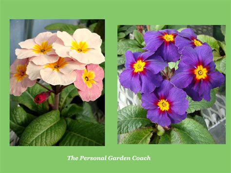 early flowering perennial performers for impact the personal garden coach