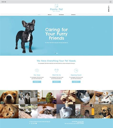 wix templates pet shop website template wix website templates