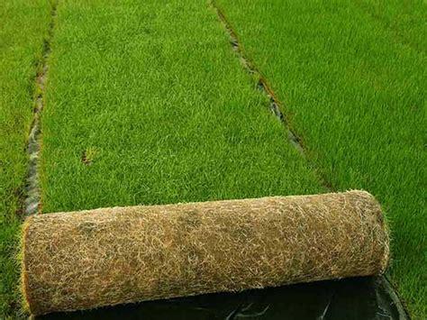 tappeto erboso a rotoli prato a rotoli sassuolo reggio emilia prezzo posa