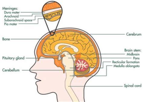 brain tumor diagram meningioma brain tumour surgery