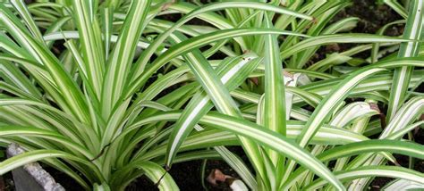 foliage plants 6 stylish houseplants that are safe for cats and dogs