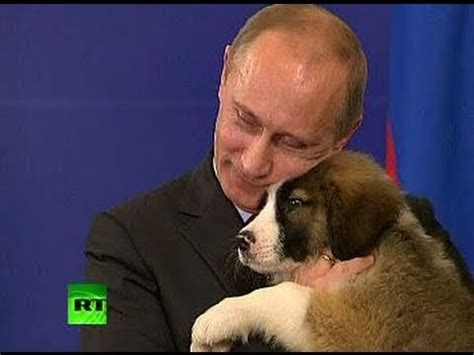 putin puppy a s pet lover putin needs name for fluffy puppy