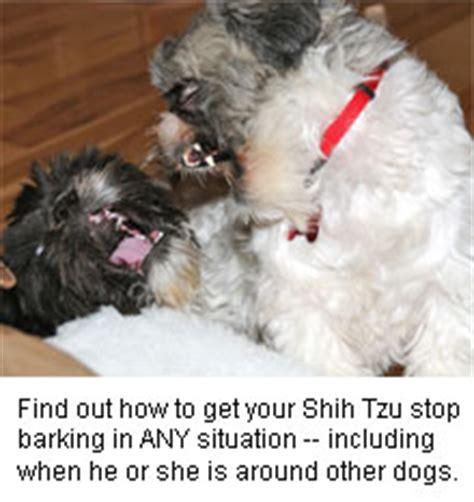 shih tzu barks much the shih tzu barking solution master class