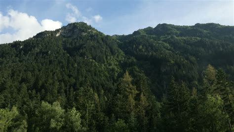 mountain rubber st pine tree forest on mountain top blue skies