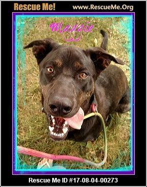 rottweiler rescue idaho iowa rottweiler rescue adoptions rescueme org