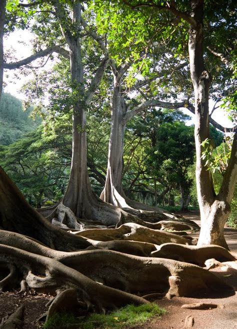 Botanical Gardens Kauai Botanical Gardens Kauai And Tropical On Pinterest